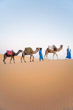 Berber Men Walking With Their ...
