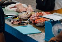 Ecuadorian Fish Market