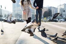 Couple Walking Amongst The Pigeons