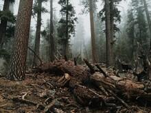 Fallen Tree In Moody Forest