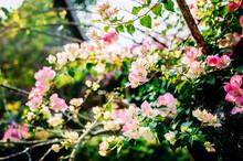 Beautiful, Bright, Pink Blosso...
