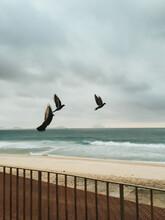 Three Birds Taking Off On Stor...