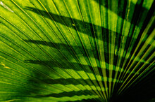 Tropical Green Leaf Texture