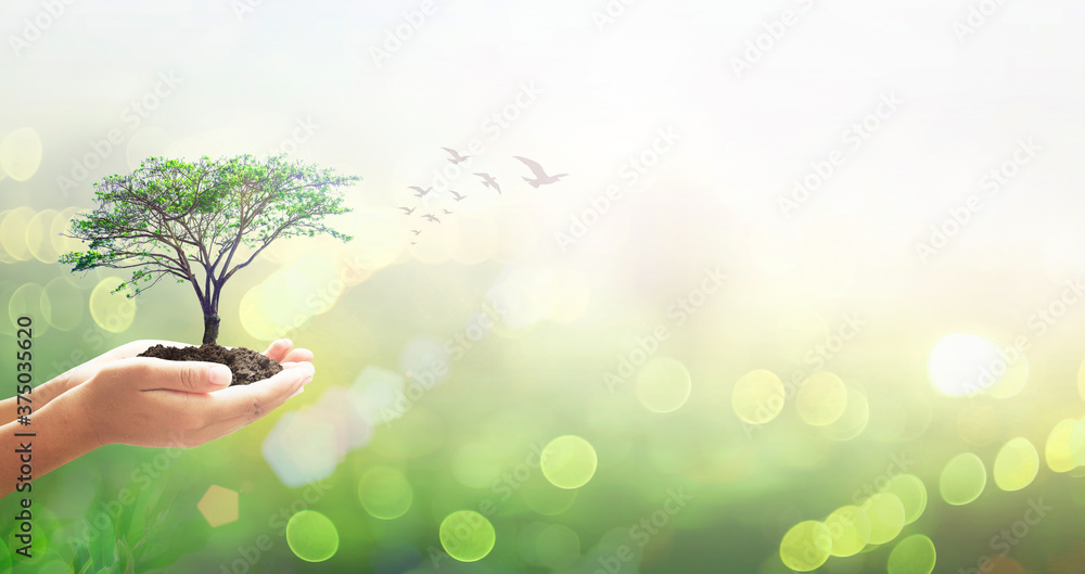 Fototapeta World environment day concept: Human hands holding big tree over green forest background