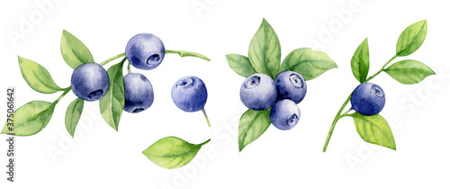 Set of watercolor illustrations of blueberries on twigs with leaves.