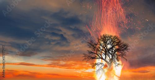 Obraz na plátně Burning Tree on fire at day with stormy sky