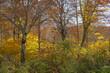 Beautiful autumn landscape in Northern Alps of Japan, Otari, Nagano.