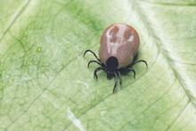 A Dangerous Parasite And Infec...