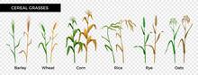 Cereal Grasses Flat Set