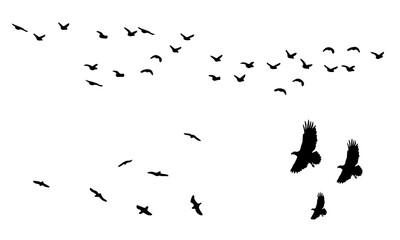 flock of birds silhouette vector icon
