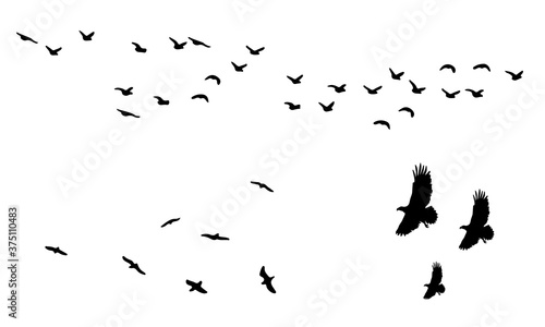 flock of birds silhouette vector icon Canvas