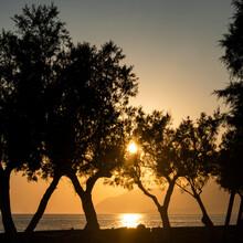 Sunset Olives