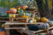 Halloween Pumpkins And Gourds On Palettes