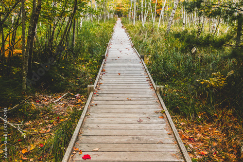 Tablou Canvas Boardwalk in autumn forest