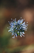 Detail Of An Beautiful Blue Wi...