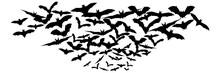 Halloween Flying Bats. Decorat...