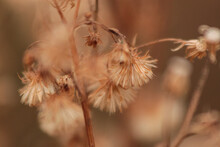 Little Ironweed - -beautiful D...