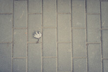 A Leaf On The Street