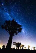 Quiver Tree Forest And Stars In Namibia