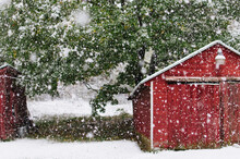 Snow Flakes Falling Near A Red...