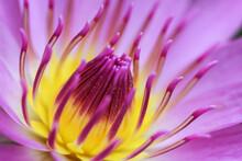 Lotus Of India
