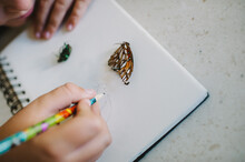 Child Sketching A Butterfly In...