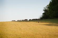 Organoic Livestock Farming.