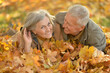 canvas print picture Portrait of beautiful senior couple relaxing in park
