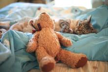 Siamese Kitty Sleeping On A Yo...