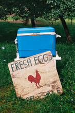 Fresh Eggs For Sale From A Cooler