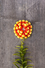 Autumn Concept: Candy Corn Flower