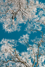 Snowy Tree Branches Against Sky