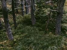 Lush Forest Ground