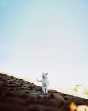 Happy-go-lucky: Cat Taking A Walk On Roof
