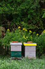 Colorfully Painted Wooden Beehives