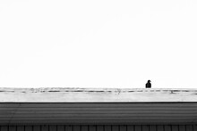 Single Bird Sitting On A Roof In Black And White. Minimal Image