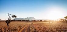 Desert Track Into The Sun, Namibia