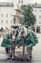 Cab Horses Called Fiaker In The Oldtown Of Salzburg