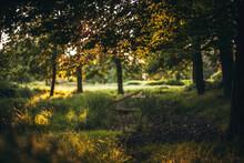 Woodlands At Sunset