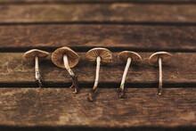 Mushrooms In A Line