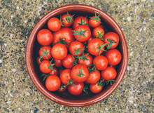Bowl Of Freshly Picked Tomatoes