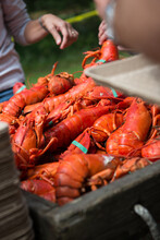 Cooked Lobsters At A Traditional New England Lobster Bake