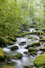 Moss Covered Rocks In A Clear Mountain Stream