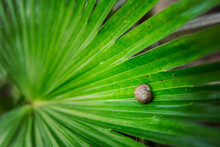 Small Snail On A Vibrant Green...