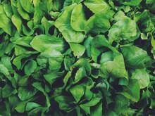 Fresh Lettuce At A Farmers Mar...