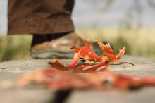 Birds-eye View Of Autumn Leaves And Person