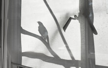 Bird Shadow In Window