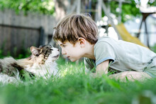 Child Plays With His Maine Coon Cat In His Backyard