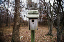A Forgotton Birdhouse Stands Amongst Trees In The Woods.