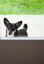 Black Crossbreed Dog Waits Out...